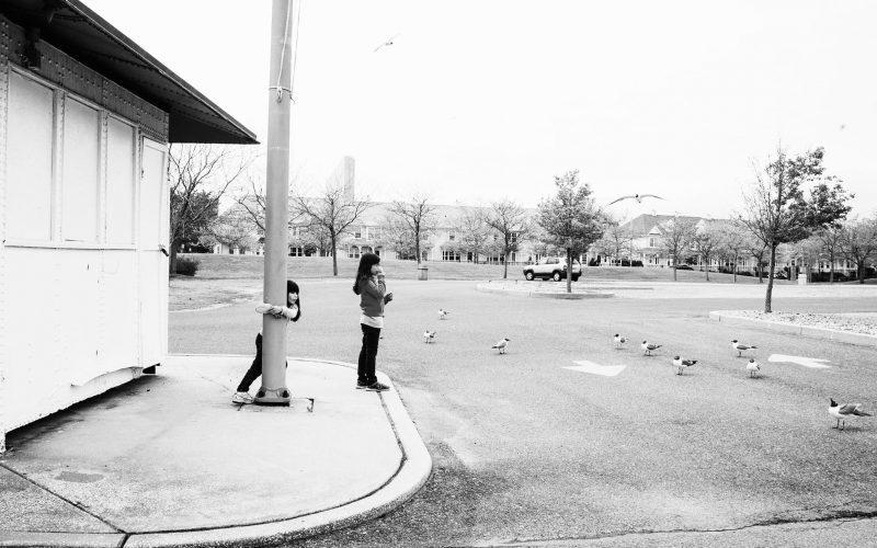 Snapshot: Feeding the birds